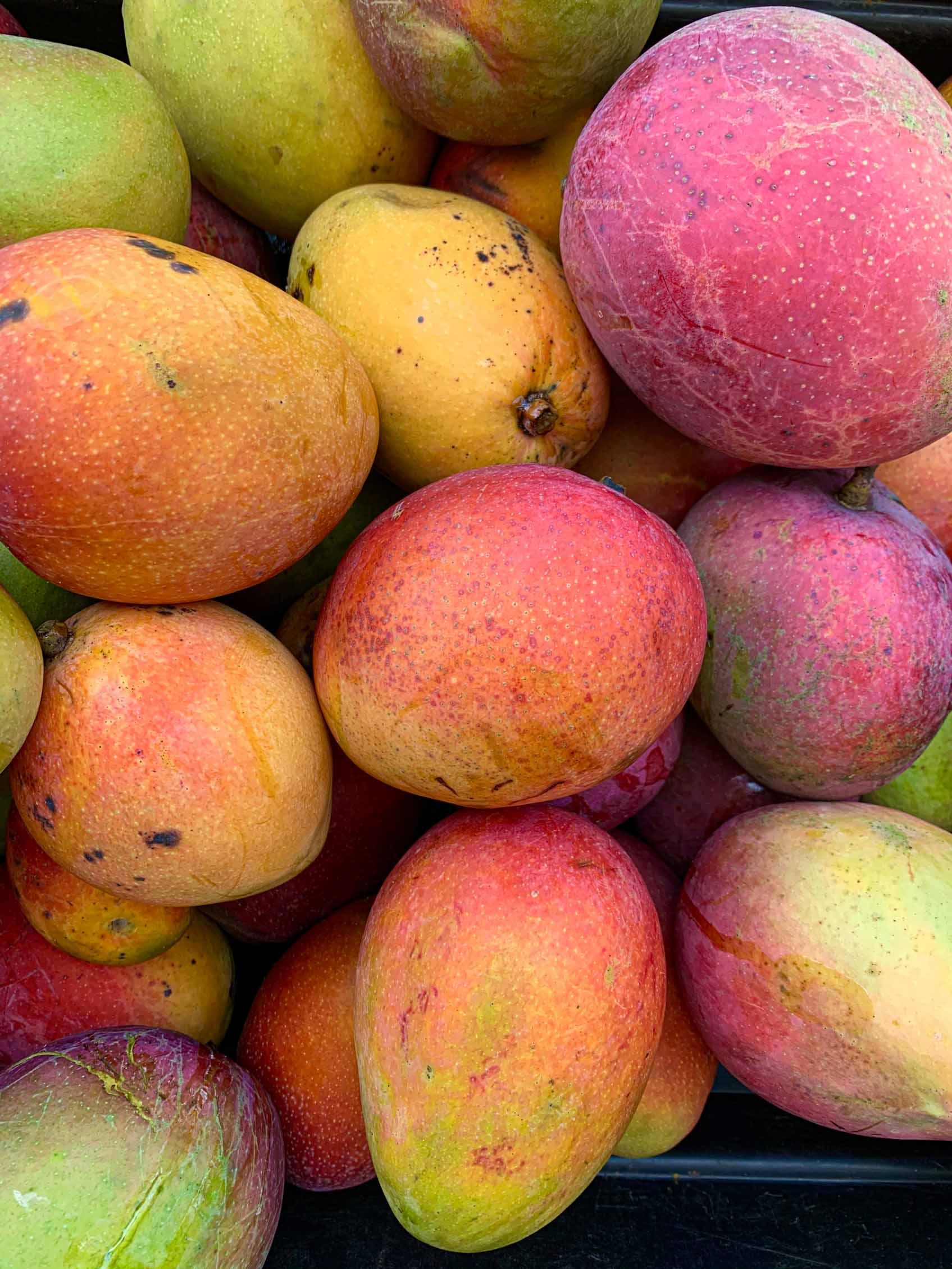 close up of ripe mangoes